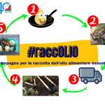 #raccOLIO